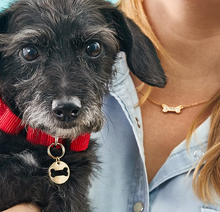 Pet Content for Chewy.com and Martha Stewart Living